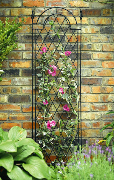 Metal Trellises Pictures to pin on Pinterest